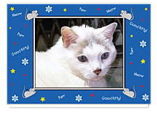 Good Kitty Blue Christmas Photo Cards